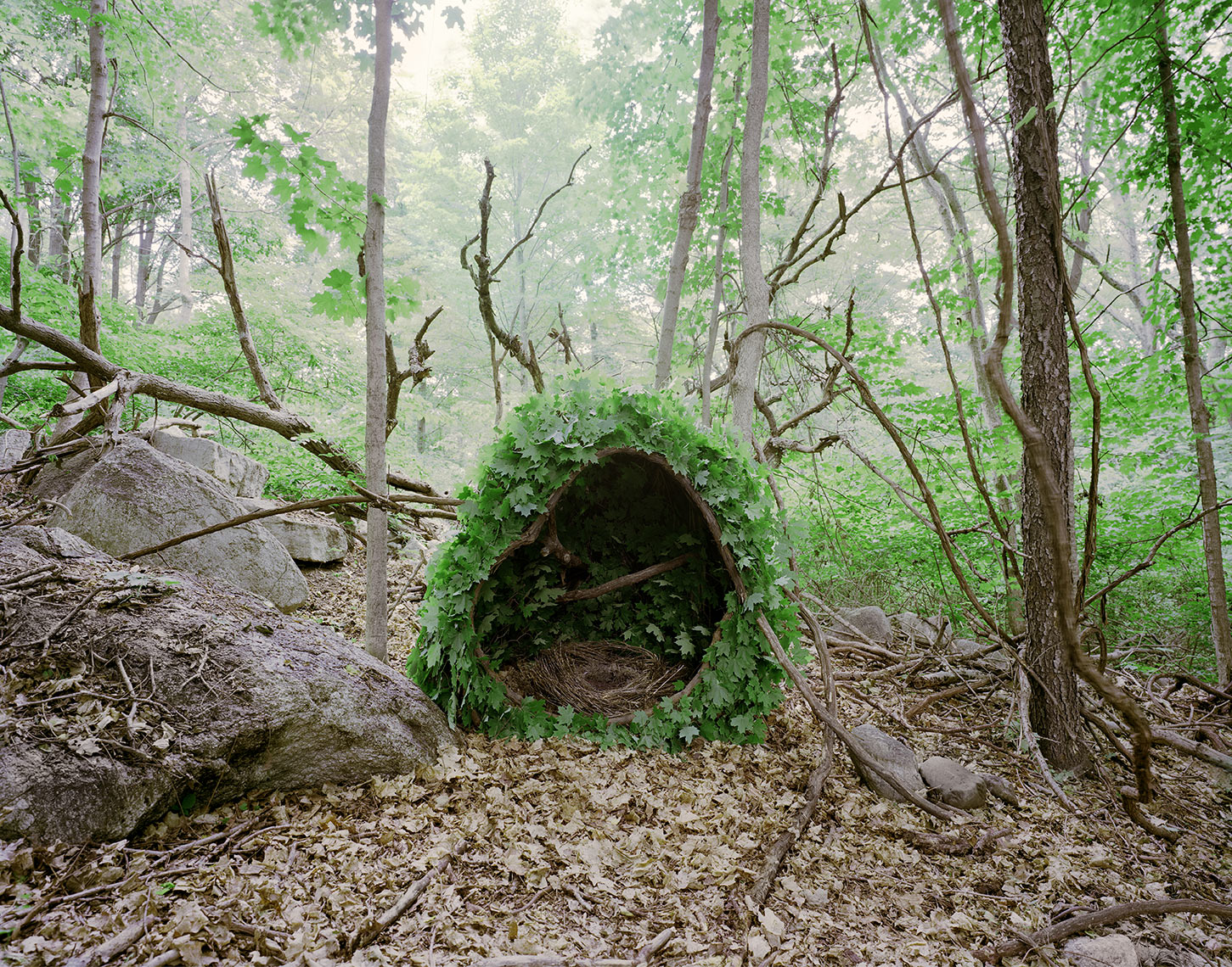 """Shelter N°PC97a"", vines, leaves, built in 2015, photographed with a 4x5 large format analog camera, chromogenic paper,  55.5 x 71.5 inches  I 140.97 x 181.61 cm ©Pascal Demeester"